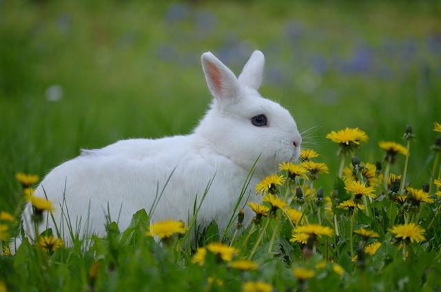 kaninchen rasse bestimmen