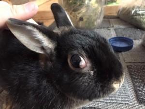 hervor quillende augen kaninchen
