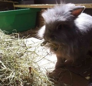 heu-kaninchen