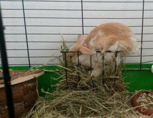 heuraufe gefährlich kaninchen bruch