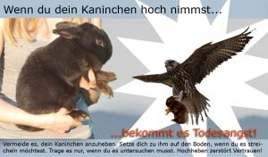hochnehmen-greifvogel Kopie