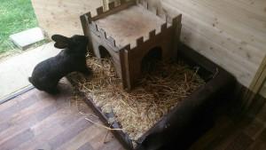 hundebett kaninchen handicap