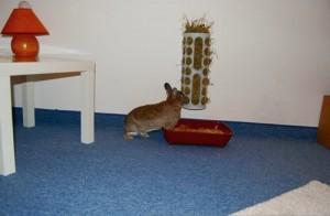 ikea raufe kaninchen