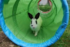 ikea tunnel kaninchen