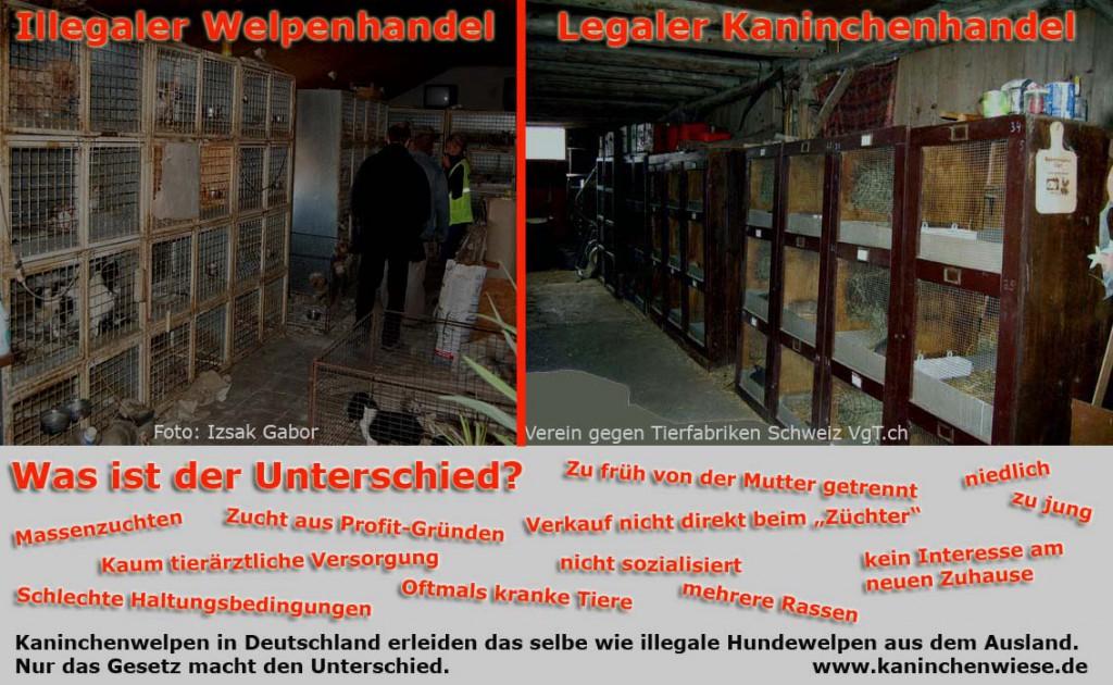illegaler kaninchenhandel Kopie