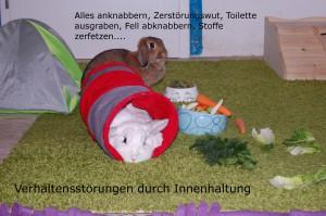 innenhaltung kaninchen