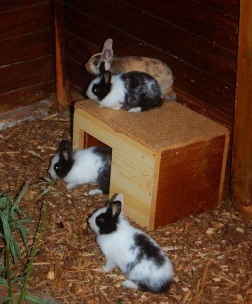 Einmal Kaninchenbabys