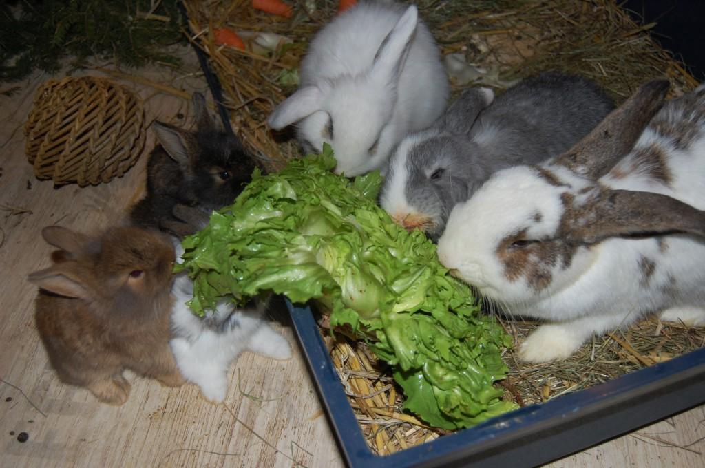 kaninchen 26 tage