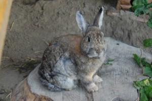 kaninchen-abgemagert