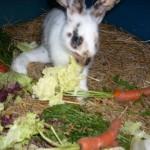 kaninchen-abstehendes-bein