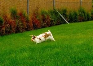 kaninchen aktiv
