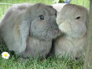 kaninchen-alleine-gluecklich