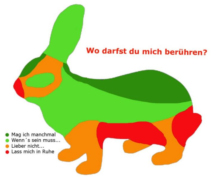 kaninchen-anfassen-wo Kopie