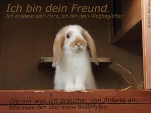 kaninchen-anschaffung