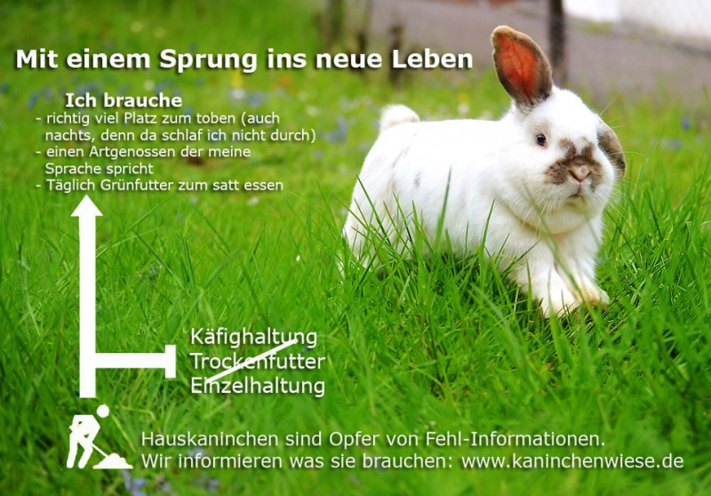 wie alt werden kaninchen im durchschnitt gesundheit haltung kaninchen pflege. Black Bedroom Furniture Sets. Home Design Ideas