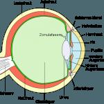 Augenerkrankungen