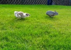 kaninchen bewegungsdrangan