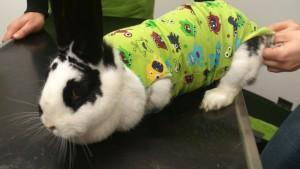 kaninchen body nachsorge