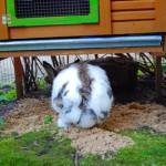 kaninchen buddelplatz