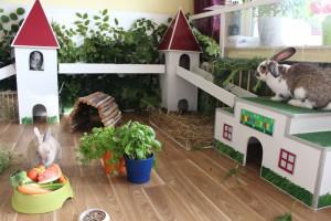 Käfige sind out und unwohnlich - auch in der Wohnung lässt sich ein Kaninchenreich zaubern.
