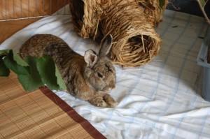 kaninchen-einschläfern