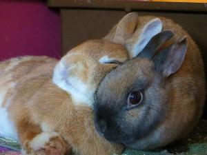 kaninchen-einzelhaltung