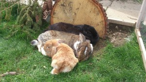 Kaninchenhaltung für Kids & Teenis