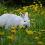 kaninchen ernährung gesund