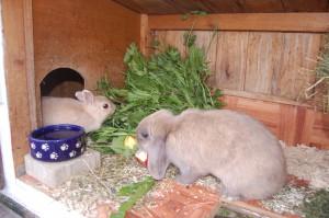 kaninchen ernährung im winter