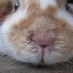Ist mein Kaninchen krank?