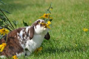 kaninchen fressen selektion