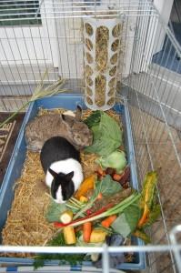 kaninchen fressplatz