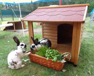 kaninchen-frische-kräuter