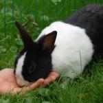 kaninchen frisst aus hand