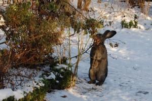 kaninchen frisst sich gesund