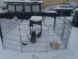 kaninchen-gehege