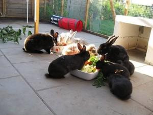kaninchen-gemüse