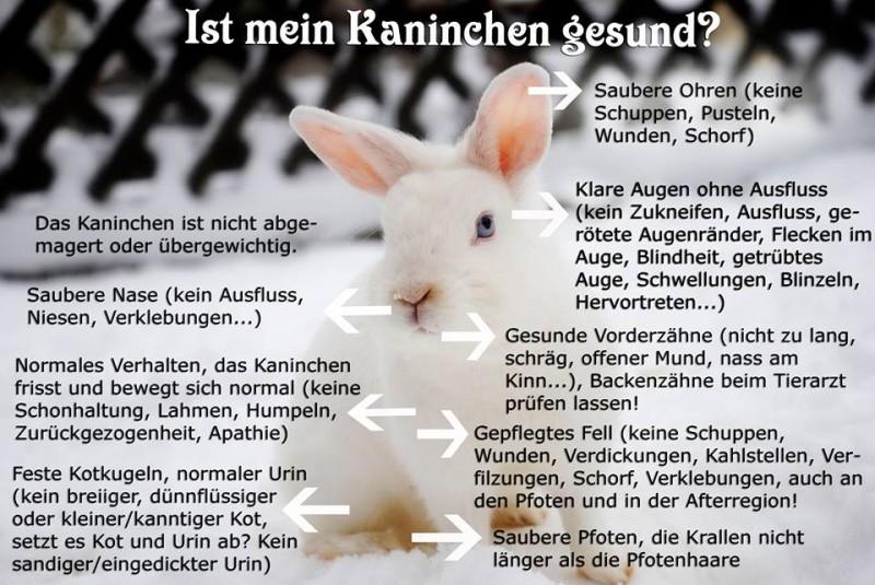 verstopfung kaninchen