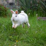 Erstausstattung für Kaninchen