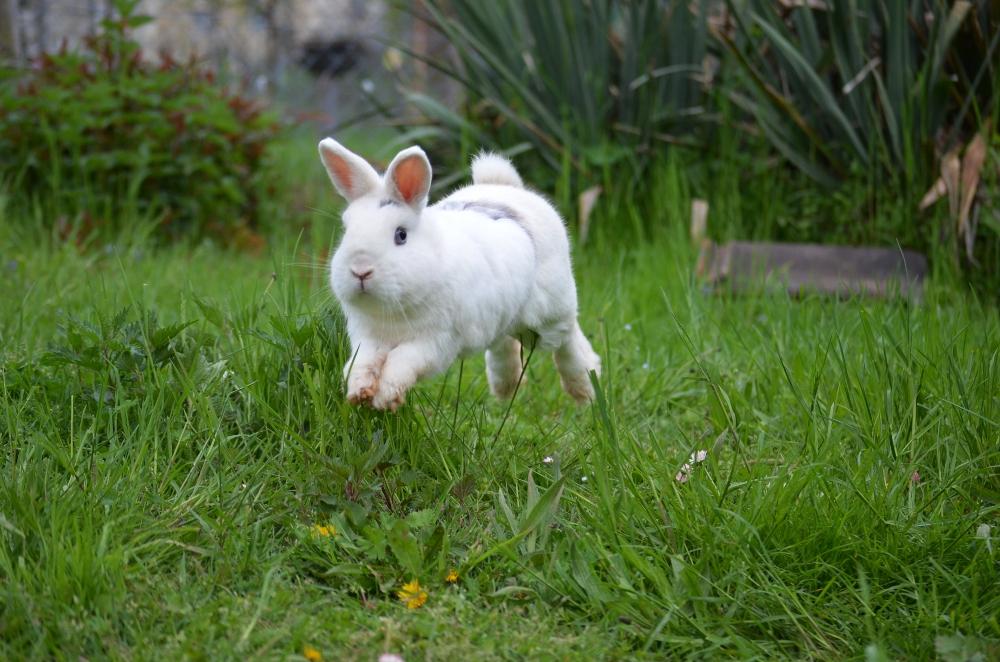 buddelkisten f r kaninchen haltung pflege verhalten. Black Bedroom Furniture Sets. Home Design Ideas