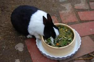 kaninchen-getr-kräuter