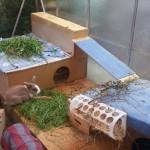 kaninchen gewächshaus gehege
