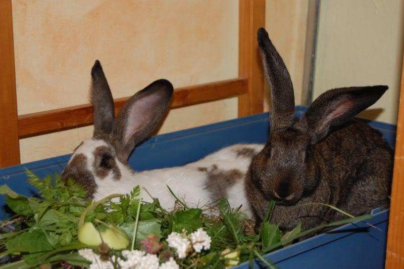 kaninchen-grundnahrung