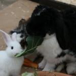 kaninchen gruppe aufzucht