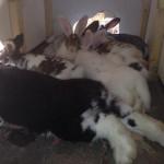 kaninchen gruppe babys