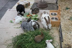 kaninchen gruppenaufzucht