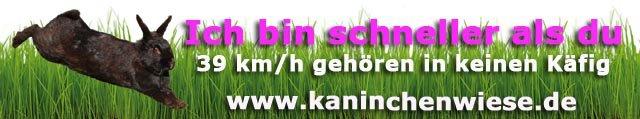 kaninchen-haltungsinfos