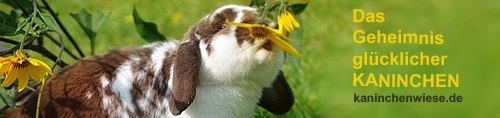 kaninchen-haltungstipps