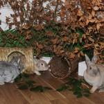 kaninchen herbst