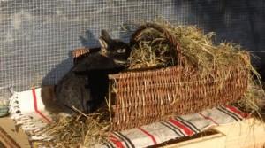 kaninchen-heuraufe